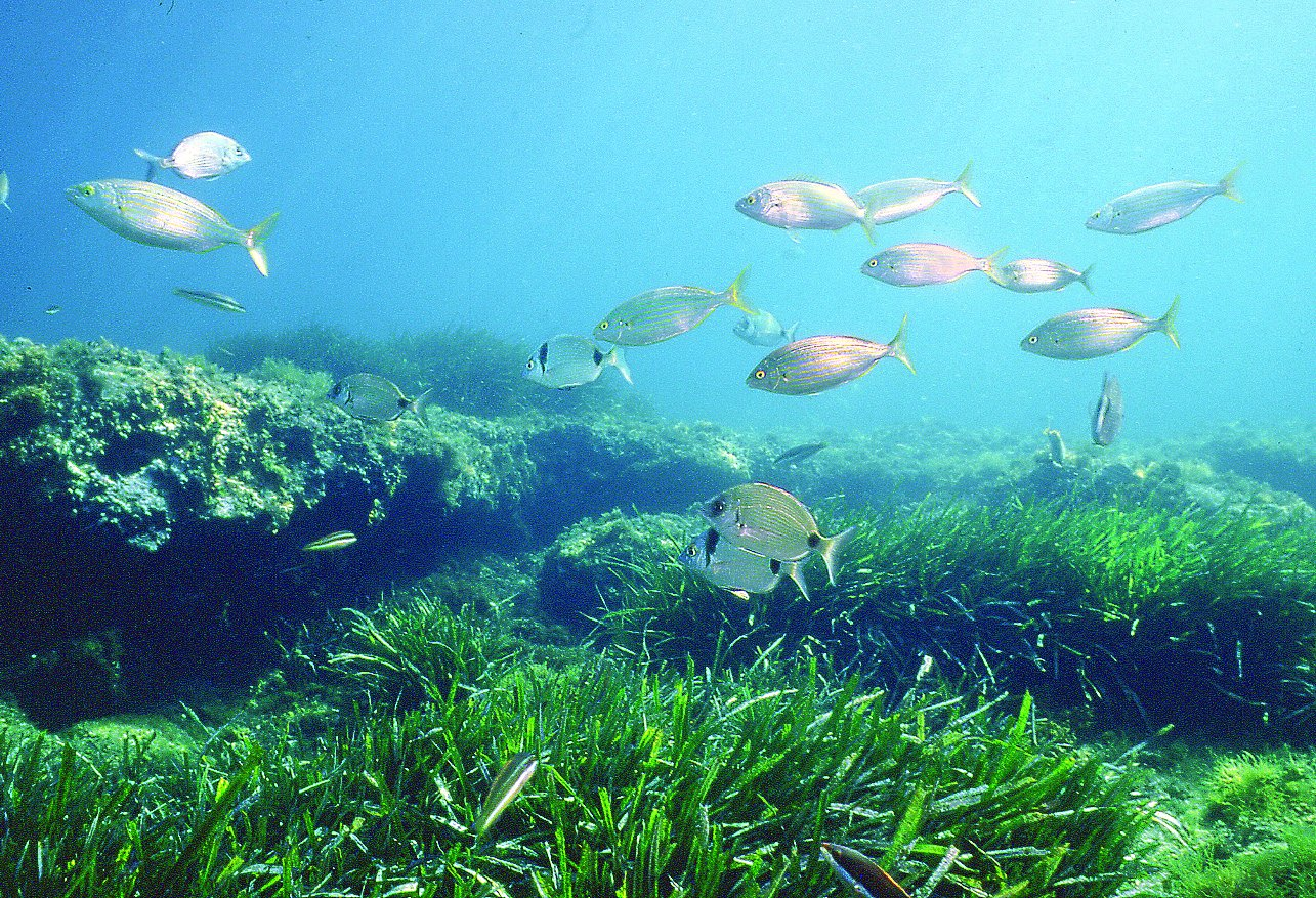 Seagrass beds ecosystem - Reef Destruction Of Wetlands Coral Reefs And Seagrass Beds For
